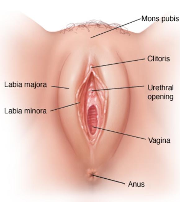 schamlippen sex tube